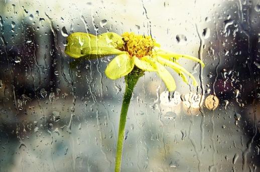 Typhoon Haiyan rain-68165_640